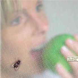 mosquiteras